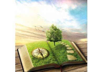 Meio Ambiente e a responsabilidade da Igreja Metodista