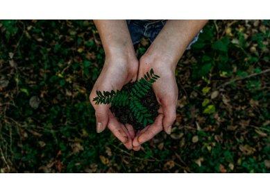 Discípulas e discípulos nos caminhos da missão cuidam do meio ambiente