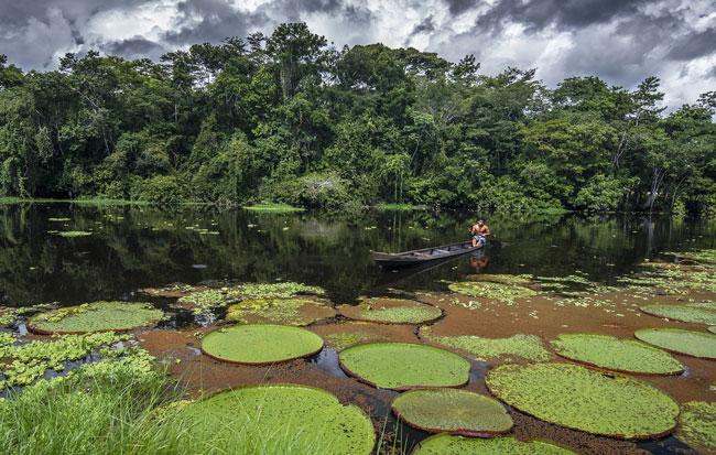 Imagem de um homem navegando de barco na Floresta da Amazônia